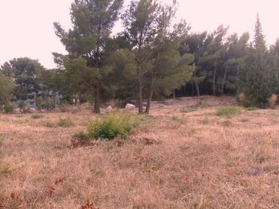 Terrain à bâtir, 850 m²